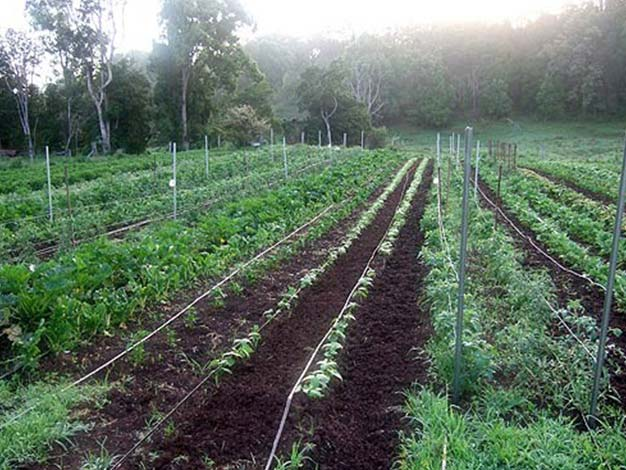 Organic cultivation at ISKCON New Govardhana, NSW, Australia